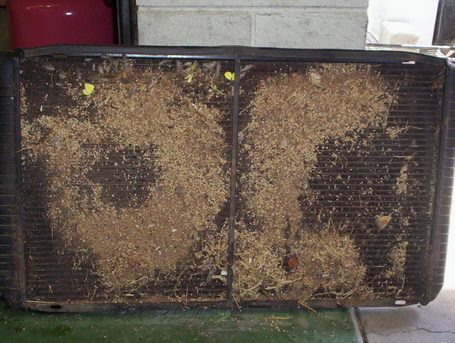 Blocked EL radiator- grass seeds_resize.jpg
